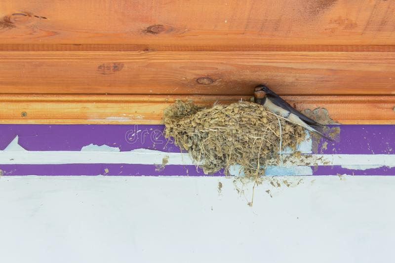 Slik in nest stock afbeelding