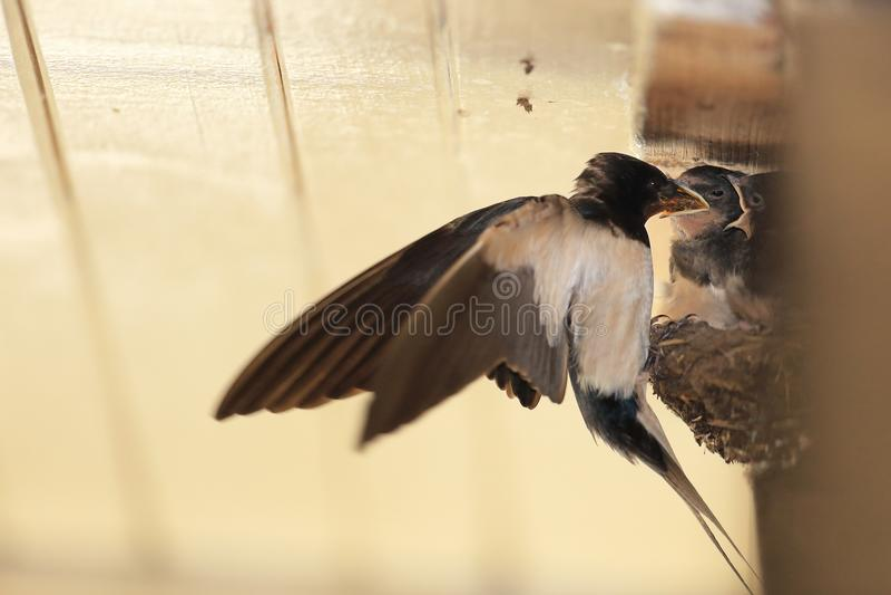 Slik op het nest royalty-vrije stock fotografie