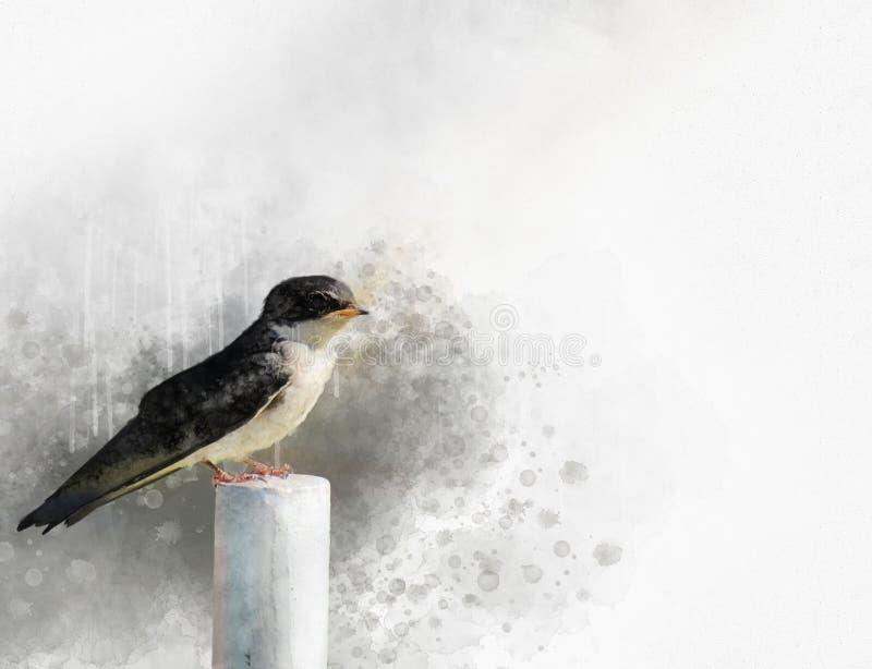 Slik waterverfillustratie De lentevogel Vogelswift Vlugge vlucht stock illustratie