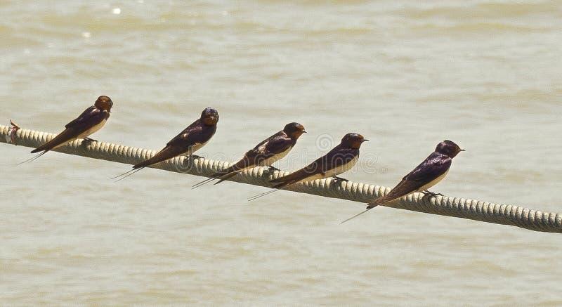 Slikt rust op kabel boven de rivier Po stock foto