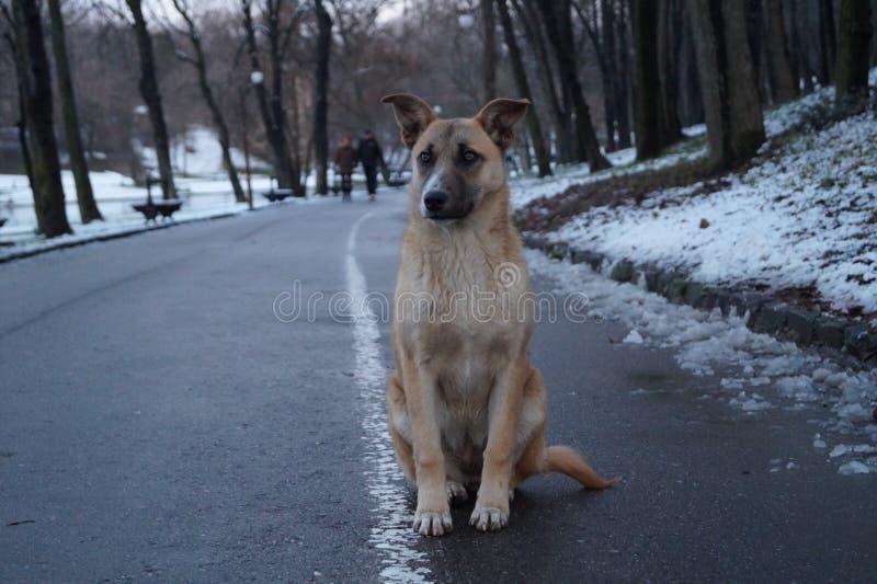 Slimme Hond royalty-vrije stock fotografie
