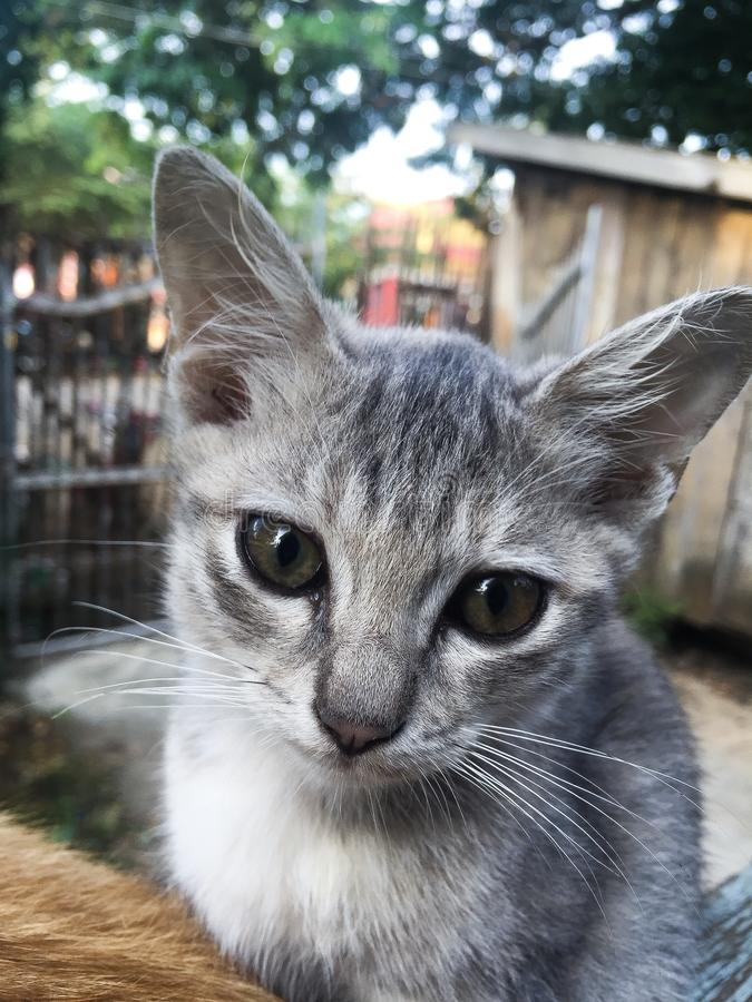 Slimme kat stock foto