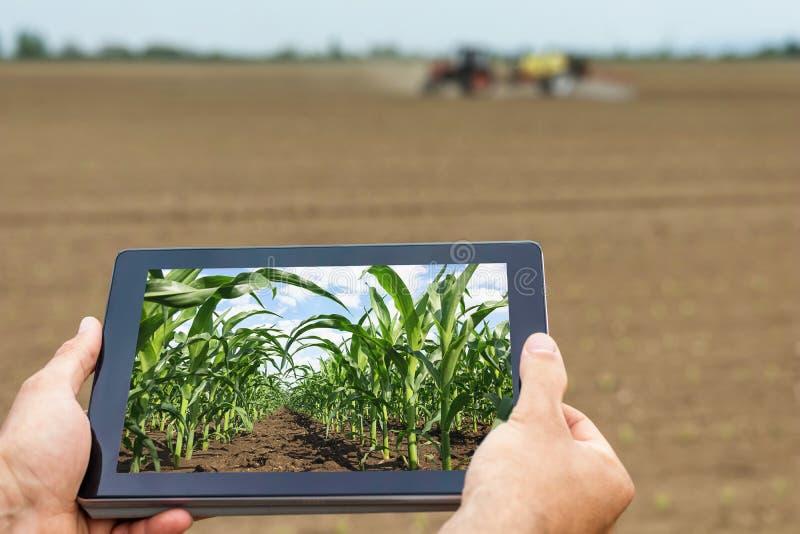 Slimme landbouw Landbouwer die tabletgraan het planten gebruiken Moderne Agr royalty-vrije stock foto