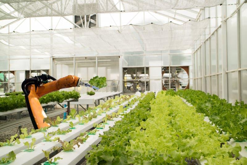 Slimme robotachtig in landbouw futuristisch concept, robotlandbouwers royalty-vrije stock afbeeldingen