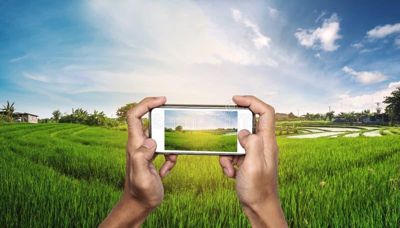 Slimme telefoon ter beschikking met padieveldpanorama in zonsondergang stock foto's