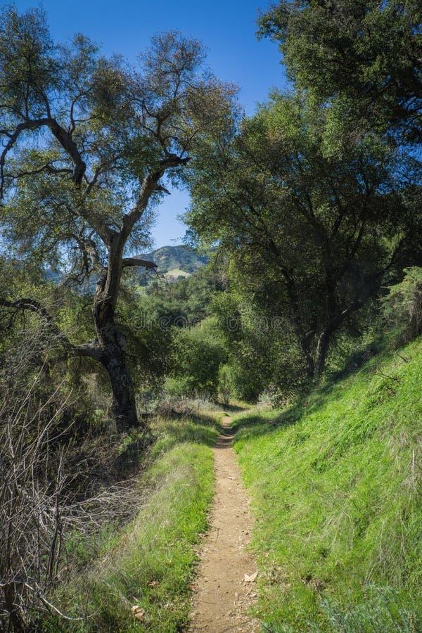 Slinga in i Kalifornien gräsplanskogsmark arkivbild