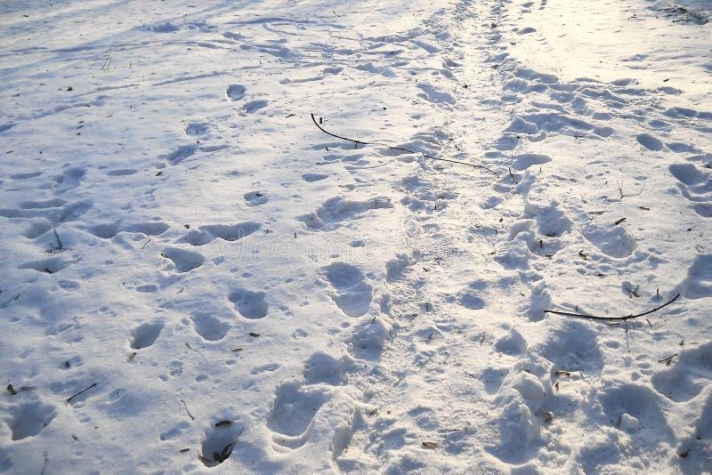 Slinga i snön efter en snöstorm royaltyfria bilder
