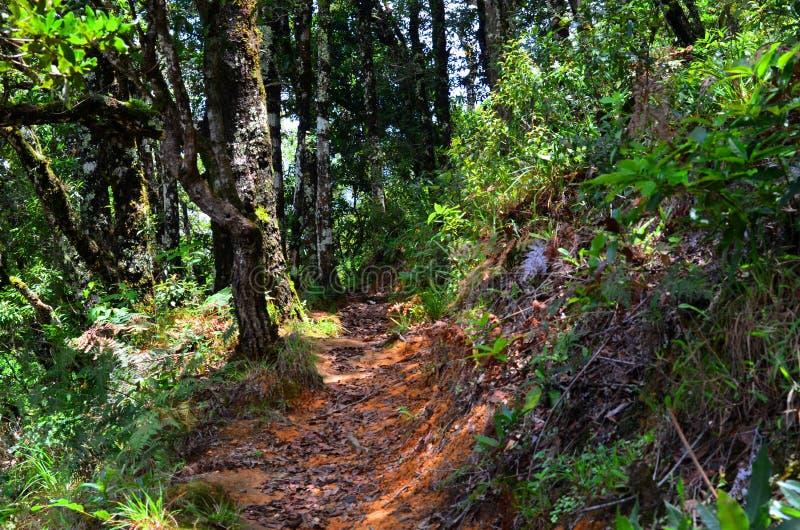 Slinga och skog, Costa Rica royaltyfri fotografi