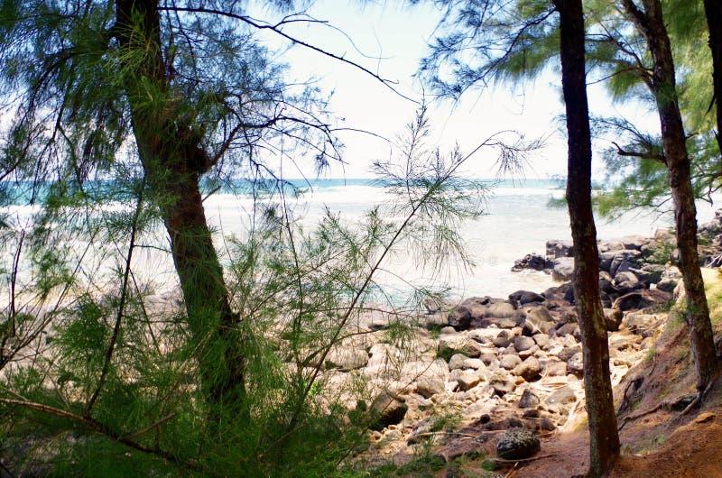 Slinga till den Sealodge stranden, norr kust, Kauai, Hawaii, USA arkivfoton