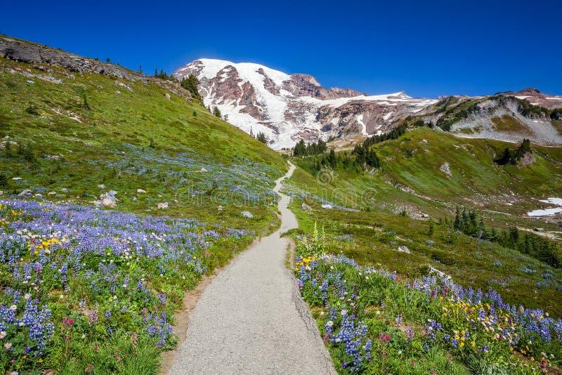 Slinga till Mount Rainier arkivbilder