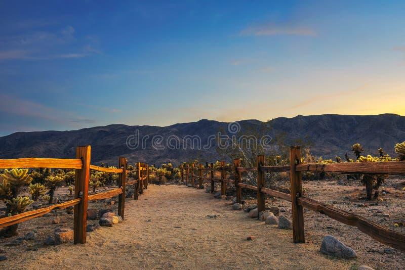 Slinga till och med Cholla kaktusträdgård i Joshua Tree National Park på solnedgången arkivbild