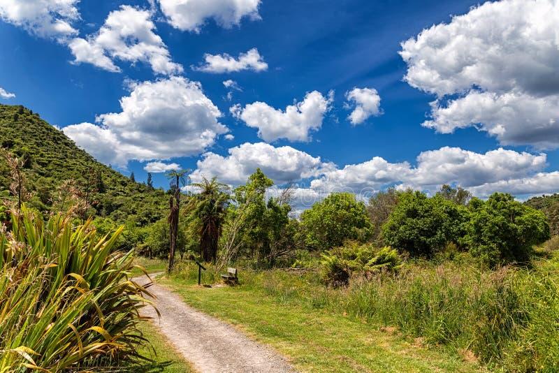 Slingan i ett härligt grönt landskap av Waimangu den vulkaniska dalen parkerar, Nya Zeeland arkivbild