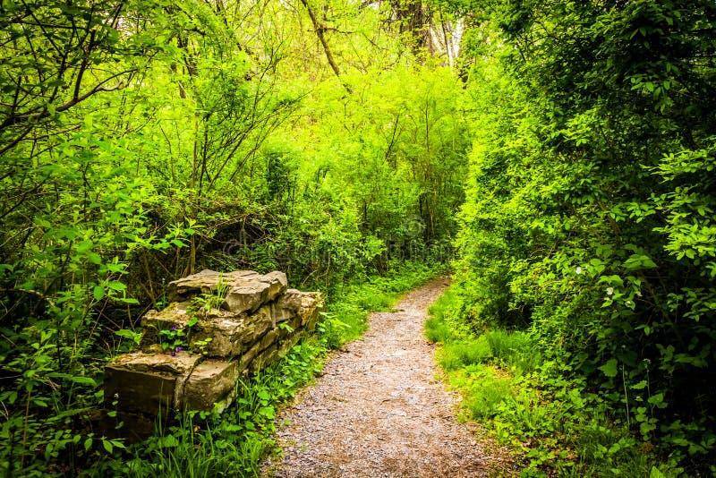 Slingan till och med skogen på urskogen parkerar, Harrisburg, Pennsylva royaltyfri fotografi