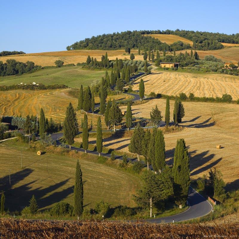 slingra tuscany royaltyfri bild