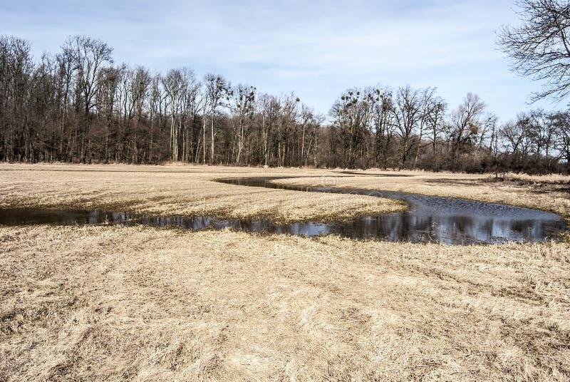 Slingrande ström på äng i våren CHKO Poodri i Tjeckien arkivbilder