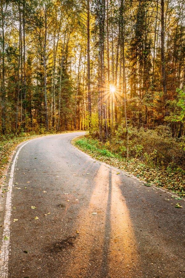 Slingrig gångbana för bana för asfaltväg till och med höstskogsolnedgång royaltyfria bilder