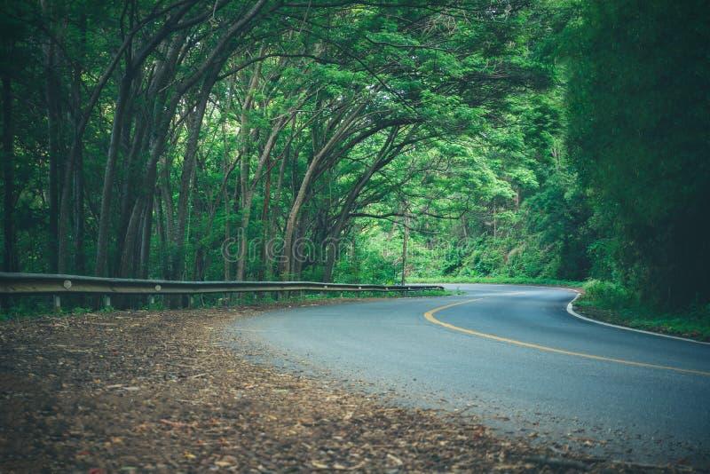 Slingrig väg och många träd Filialer täckte vägen för att vara skuggiga royaltyfria bilder