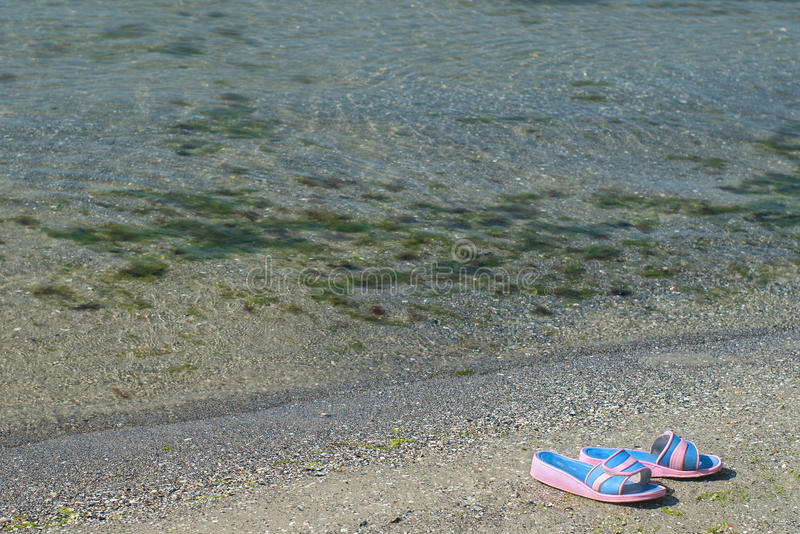 Download Slippers on the beach stock photo. Image of plants, pair - 21218698