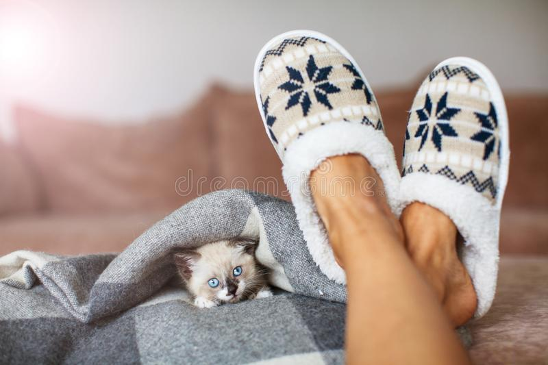 Slippers on women`s legs and kitten. Cat near soft comfortable home slipper royalty free stock images