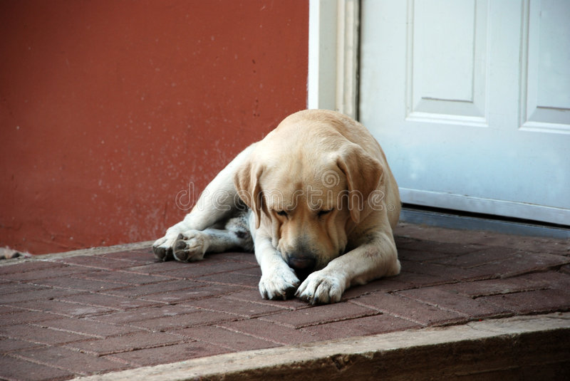 Download Slipping guard stock image. Image of companionship, emotion - 6983315