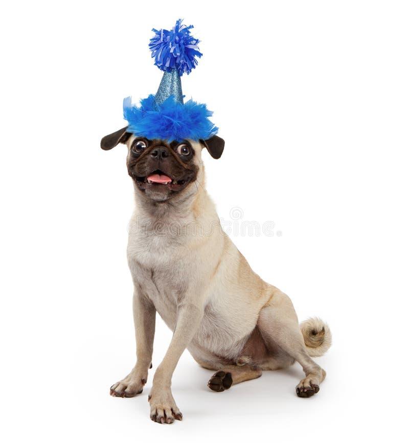 slitage barn för gullig mops för hundhattdeltagare royaltyfri fotografi