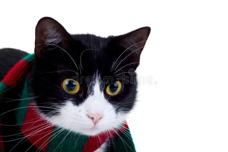 slitage för kattjulscarf royaltyfri fotografi