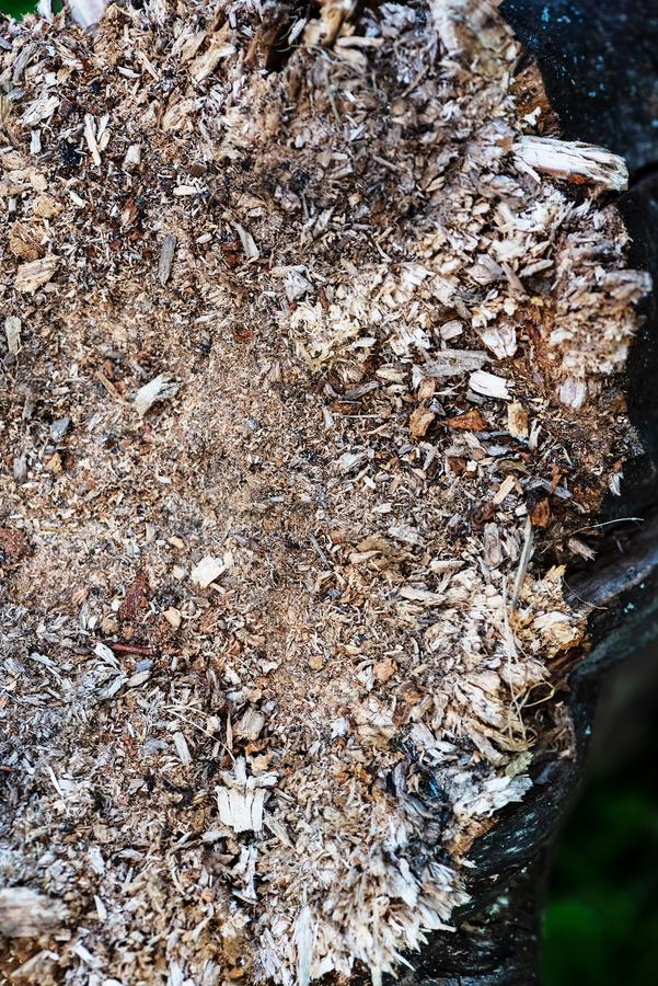 Sliver Texture on a rotting stump. Texture of wood shavings royalty free stock photography