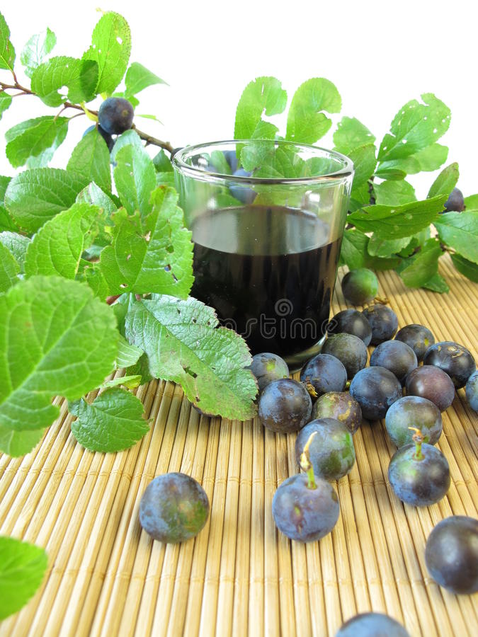Sloe fruits liquor stock image
