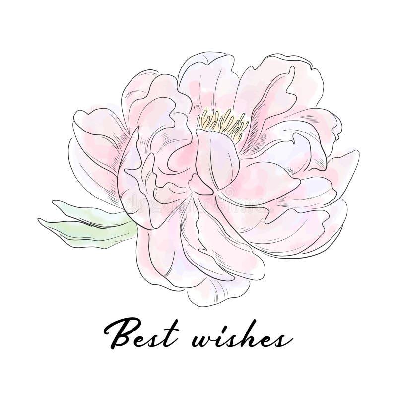 Slogan da tipografia do vetor com ilustração da flor da peônia Esboço botânico tirado mão Projeto de tiragem romântico do casamen ilustração stock