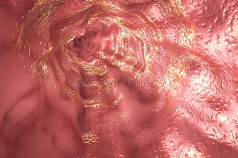 Slokdarmmucosa en esophageal sfincter vector illustratie