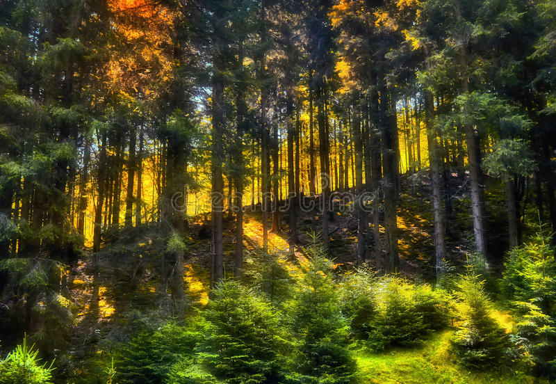 Slope in the forest. The light can be so special deep in the mixed forest. This is just a view of a small part of what, equivocal stated the Pope John Paul II stock photos