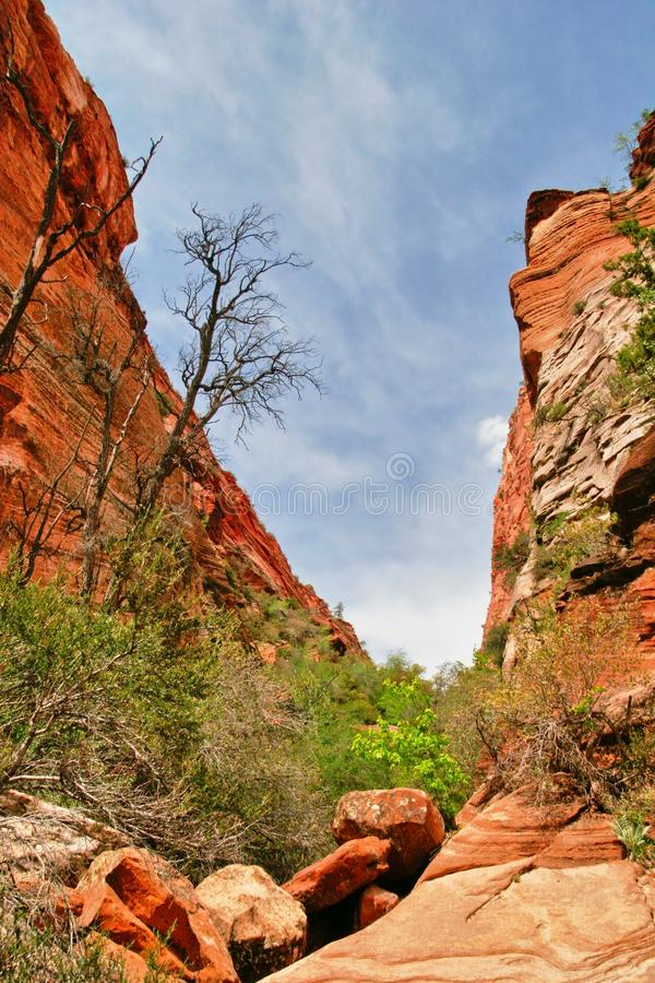 Slopes of Zion canyon. Utah. USA. royalty free stock photography