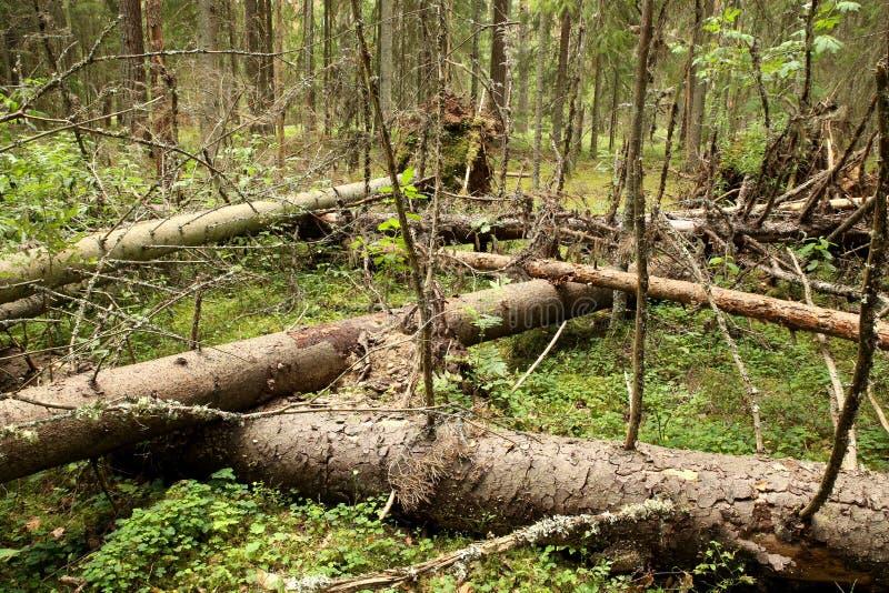 Slordig bos stock afbeeldingen