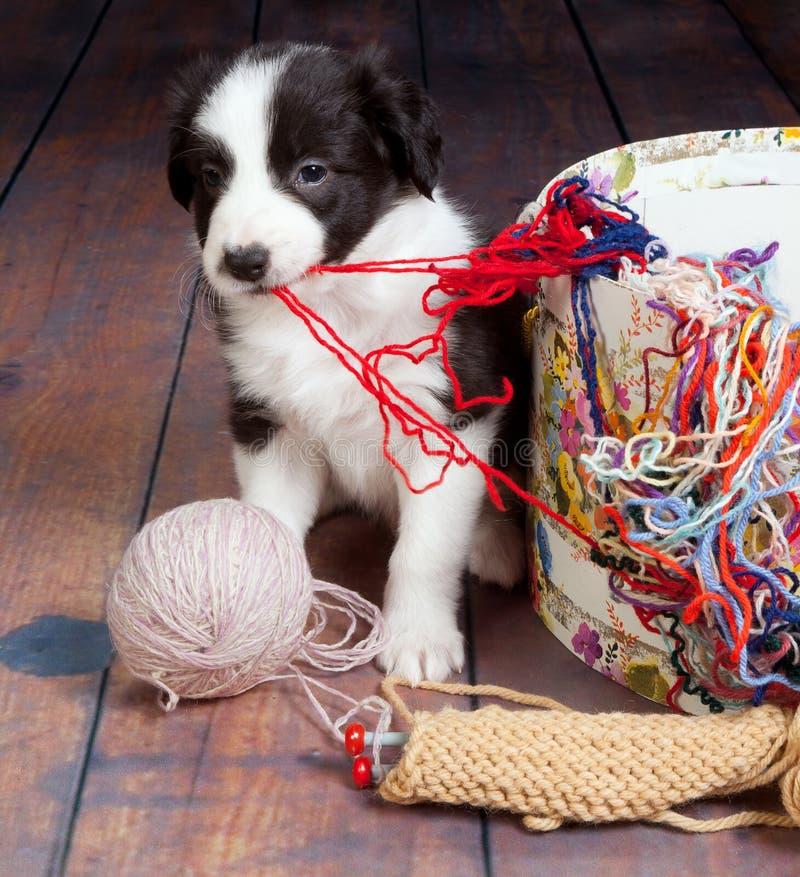 Slordig puppy royalty-vrije stock afbeeldingen