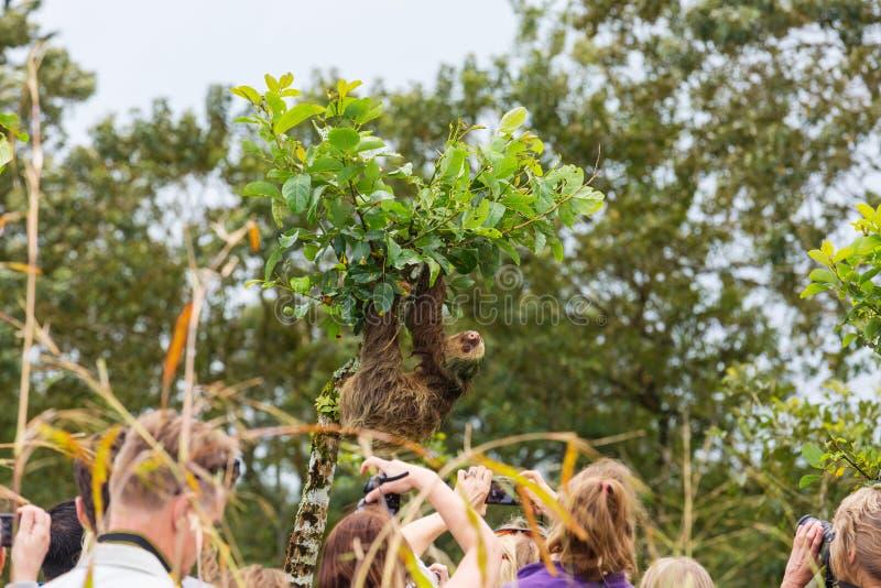 sloth royalty-vrije stock fotografie