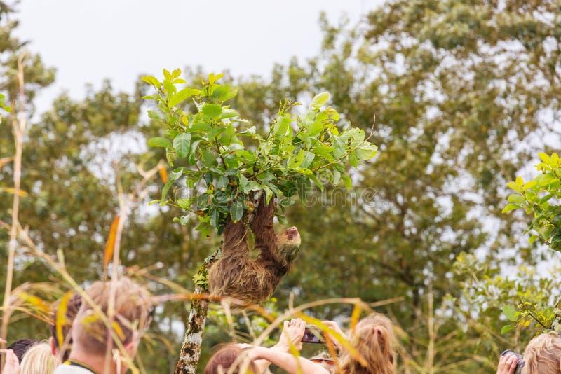 sloth stock foto's