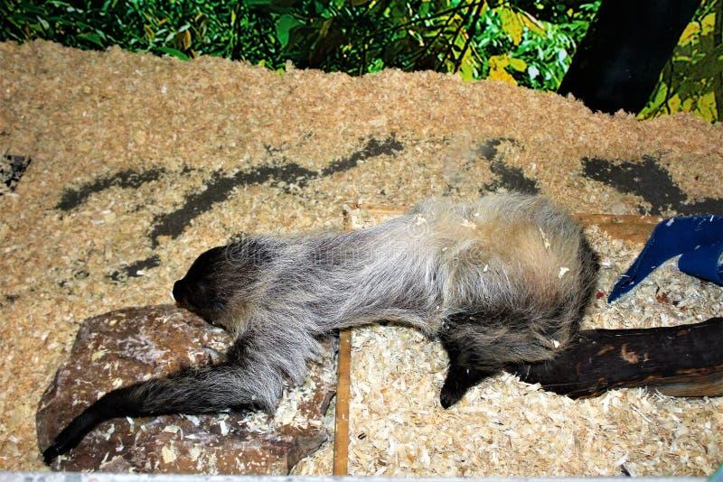 sloth royalty-vrije stock afbeelding