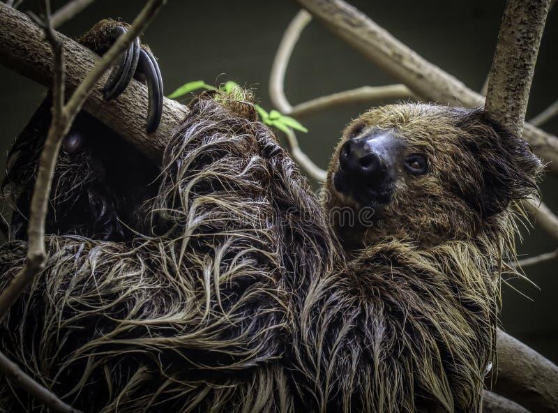 sloth imagenes de archivo