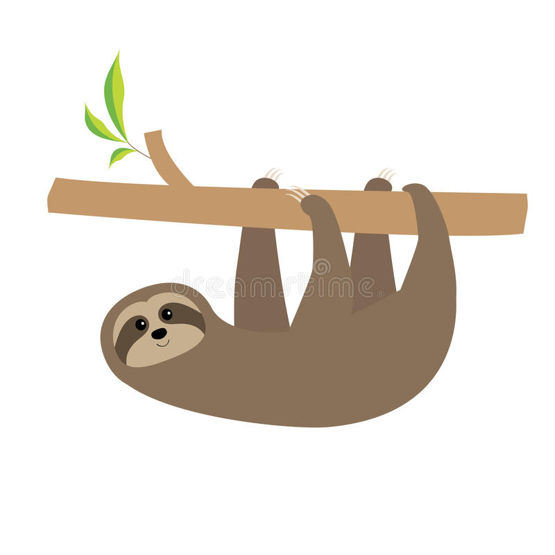 Sloth hanging on tree branch . Cute cartoon character. Wild joungle animal collection. Baby education. . White background. royalty free illustration