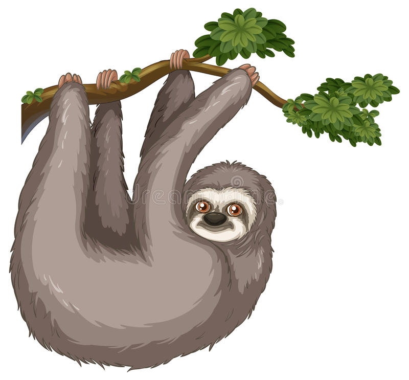 Sloth. Illustration of a sloth hanging on a branch royalty free illustration