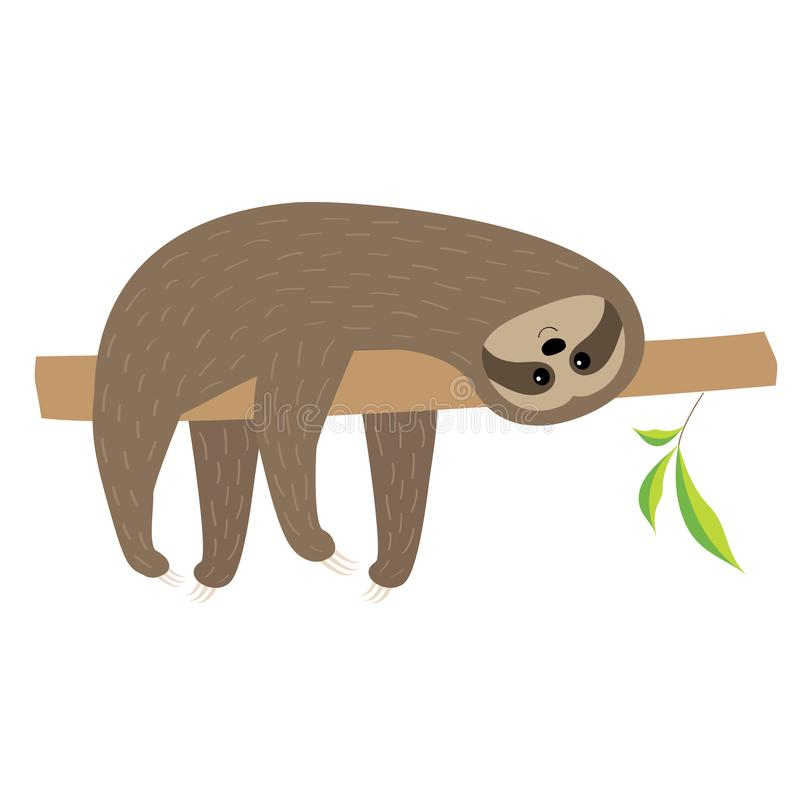 Sloth lying on tree branch. Fluffy fur. Cute cartoon character. Wild jungle animal collection. Baby education. Isolated. White bac. Kground. Flat design. Vector royalty free illustration