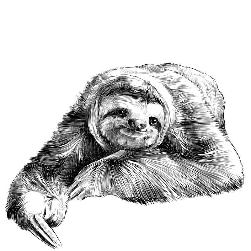 Sloth sketch. Sloth lies with crossed legs, looking right and smiling sweetly, sketch graphics black and white drawing stock illustration