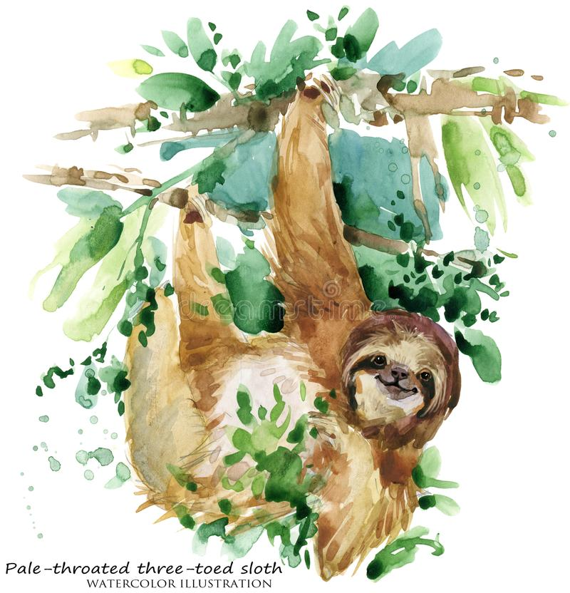 Sloth. tropical animal watercolor illustration. Watercolor sloth illustration. wild tropical animal royalty free illustration