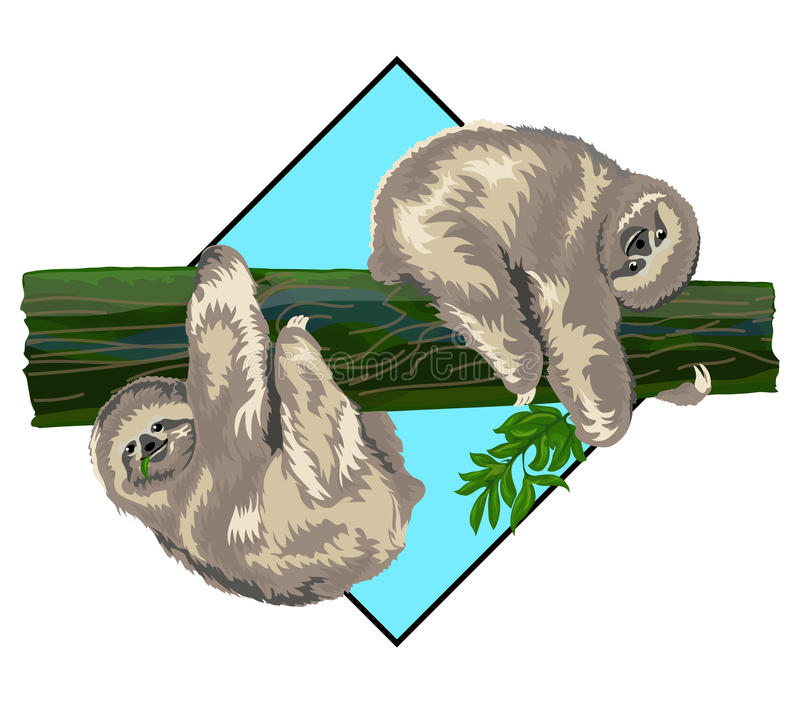 Sloth. Two funny sloth on a branch vector illustration