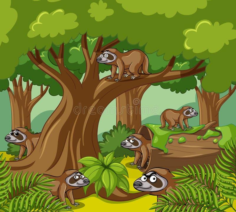 Slothes在森林居住 皇族释放例证