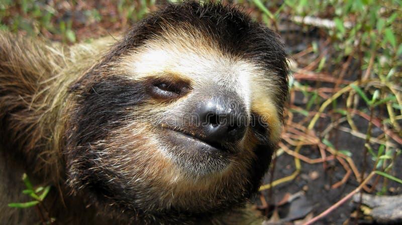 Slothhuvud royaltyfri bild