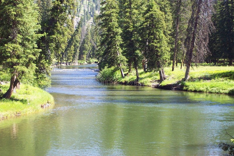 Download Slough Creek stock photo. Image of summer, pine, fishing - 200112