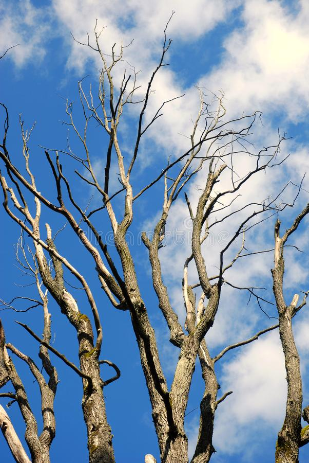 Download The Slovak Republic 2008 - Tree And Blue Sky Stock Image - Image: 7035805