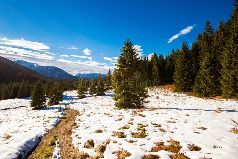Slovakian Belianske Tatry mountains landscape. Beautiful slovakian Belianske Tatry mountains. Beautiful sunny panorama - dolina zadnych medodolov royalty free stock photography