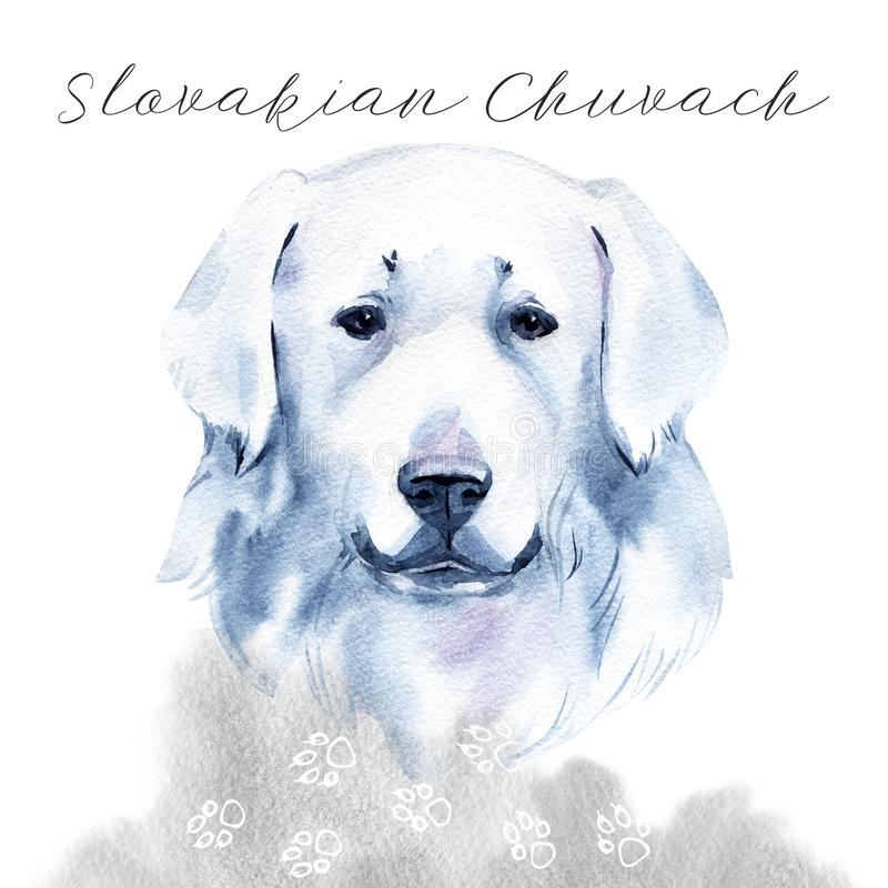 Slovakian Chuvach. Slovak cuvac dog breed with long fur digital art. Watercolor portrait close up of domesticated animal. Sticking out tongue, hand drawn doggy stock photos